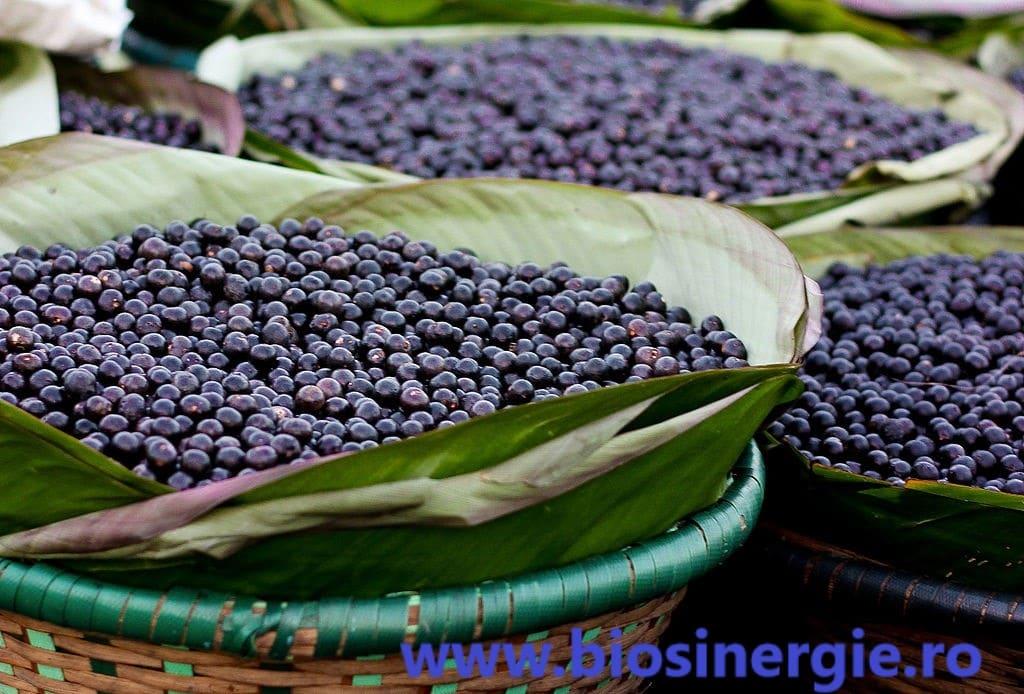 Fructul Acai
